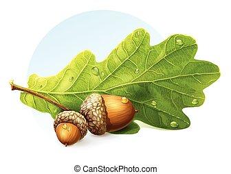 葉, イメージ, ドングリ, 秋, 緑の背景, 白