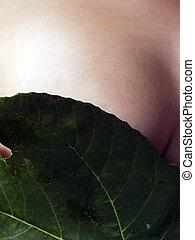 葉, カバー, womans, 緑のイチジク, コーカサス人, 胸