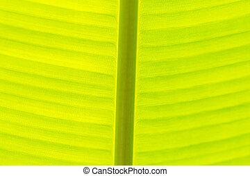 葉, クローズアップ, 新たに, 緑, バナナ, 手ざわり