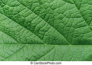 葉, クローズアップ, 緑