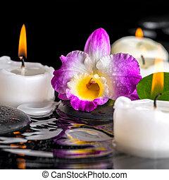 葉, クローズアップ, 露, 石, 禅, 蝋燭, さざ波, 水, エステ, 反射, 蘭, 紫色, 概念, dendrobium