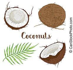 葉, ココナッツ, やし
