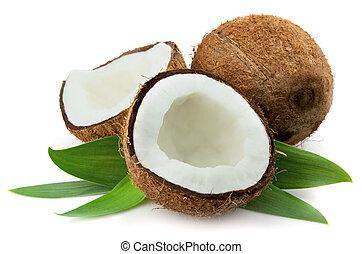 葉, ココナッツ