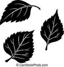 葉, セット, シラカバ, pictogram