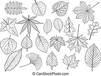 葉, セット, 木