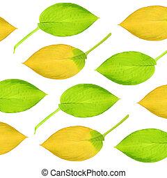 葉, デザイン, hosta