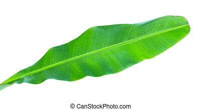 葉, バナナ