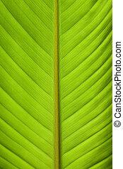 葉, バナナ, 細部