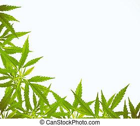 葉, フレーム, インド大麻, 明るい, 緑, sativa