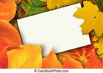 葉, ブランク, カード