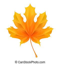 葉, ベクトル, かえで