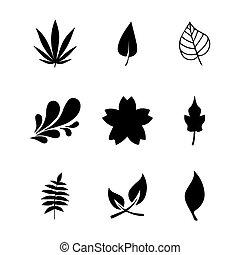 葉, ベクトル, セット, アイコン
