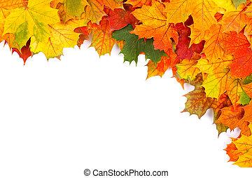 葉, ボーダー, 秋
