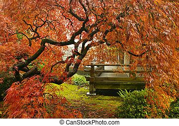 葉, レース, 木, 日本 かえで, 秋, 赤