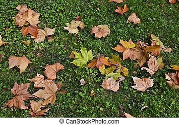 葉, 上に, 地面
