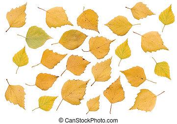 葉, 上に, 隔離された, 秋, 背景, 白