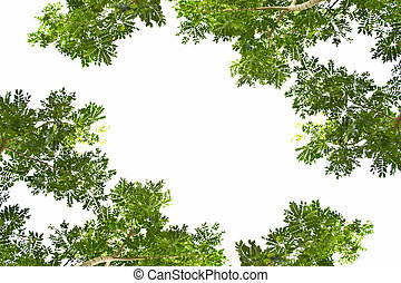 葉, 上に, a, 白い背景
