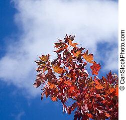 葉, 中に, ∥, 秋