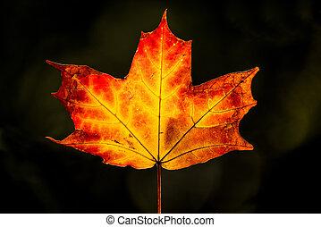葉, 光を支持しなさい, かえで