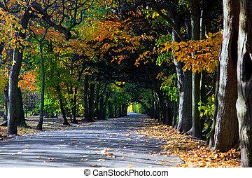 葉, 公園, 落ちる, アリー, 秋