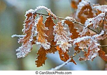 葉, 凍りつくほどである, オーク