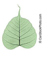 葉, 単一, スケルトン