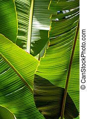 葉, 太陽, -, 背景, バックライトを当てられる, バナナ