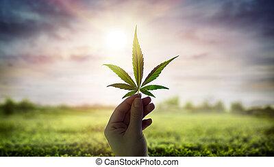 葉, 提示, インド大麻, に対して, 日光, 空, 手