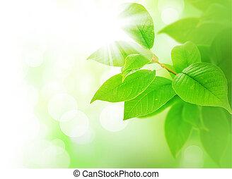 葉, 春, 緑, ボーダー
