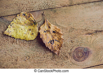 葉, 木製である, 黄色, 悲しい, 緑の背景, 古い, 顔
