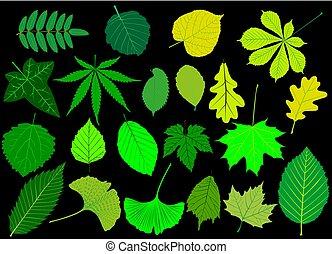 葉, 木, セット, 緑