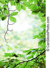葉, 木, 春, 緑の森林, シラカバ, 新たに