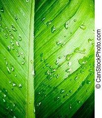 葉, 水, 緑, 新たに, クローズアップ, 低下