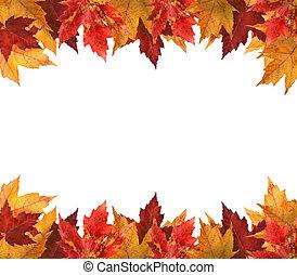 葉, 白, かえで, 隔離された