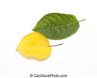 葉, 白, 緑の背景, 黄色