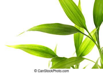 葉, 白, 隔離された, 背景, 竹
