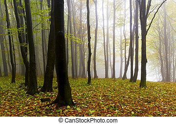 葉, 秋の森林, 神秘的, fog., 落ちている