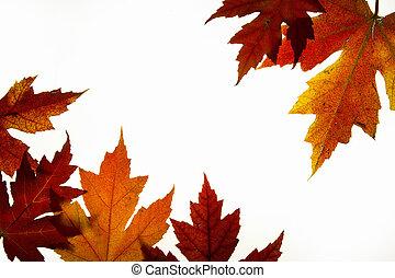 葉, 秋の色, 2, バックライトを当てられる, 混ぜられた, かえで