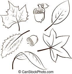 葉, 秋, スケッチ