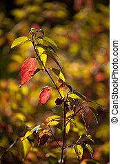 葉, 秋, ブッシュ, 魅力的