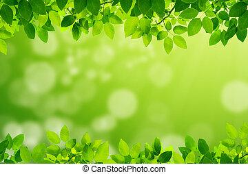葉, 緑の白, 背景