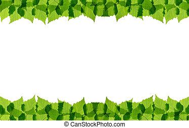 葉, 緑, フレーム, シラカバ
