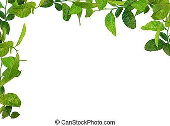 葉, 緑, フレーム