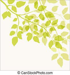 葉, 緑, ブランチ