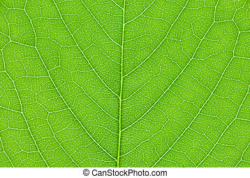 葉, 背景, さくらんぼ