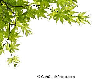 葉, 背景, 緑の白