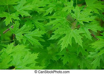 葉, 背景, 緑