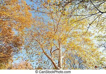 葉, 落ちたツリー