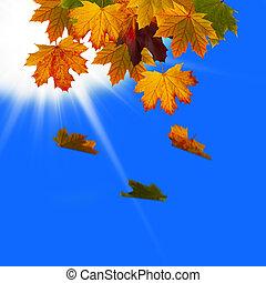 葉, 落ちている, 中に, ∥, 空
