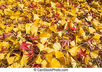 葉, 落ちている, ginko, かえで